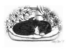 cat sympathy card